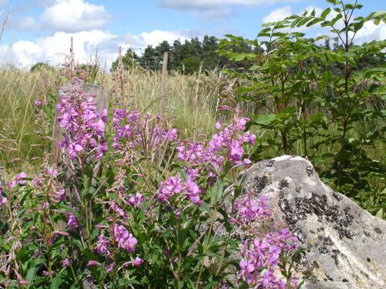 Fleurs et rochers