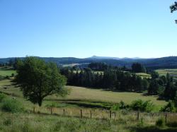 Forêts de sapins et pâturages autour du gîte