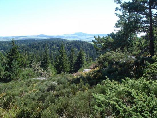 Massif du Meygal, vue au sommet du Testavoyre