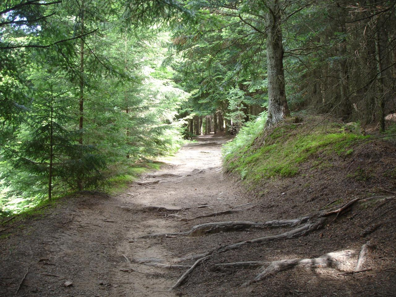 Sentier du tour du lac